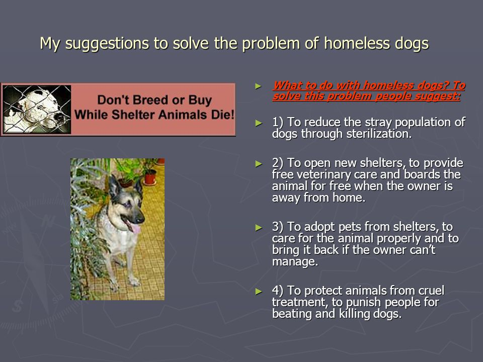 My suggestions to solve the problem of homeless dogs