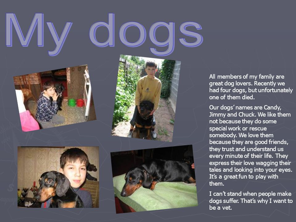 My dogs All members of my family are great dog lovers. Recently we had four dogs, but unfortunately one of them died.