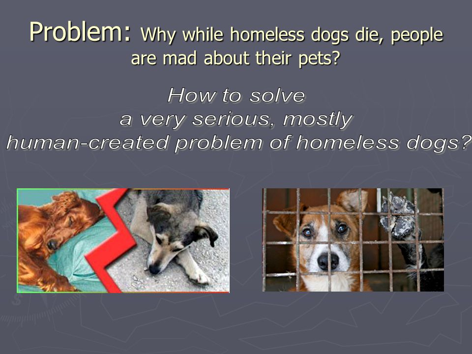 Problem: Why while homeless dogs die, people are mad about their pets