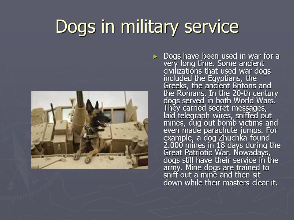 Dogs in military service