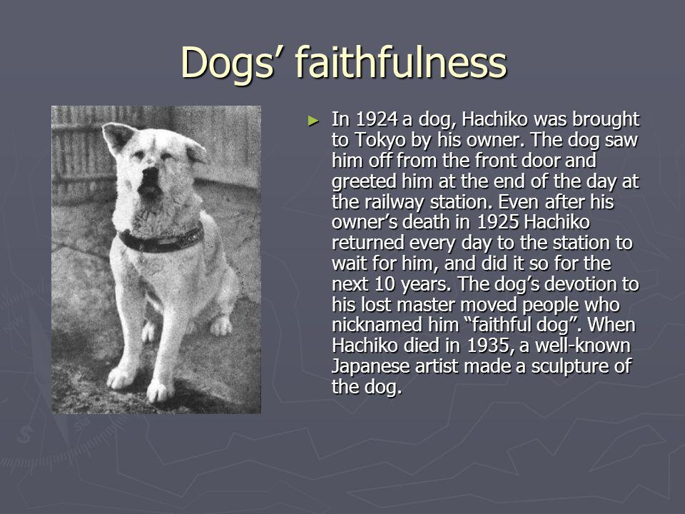 Dogs' faithfulness