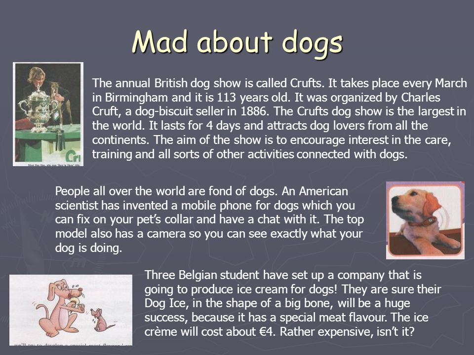 Mad about dogs