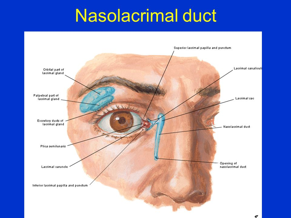 Nasolacrimal duct
