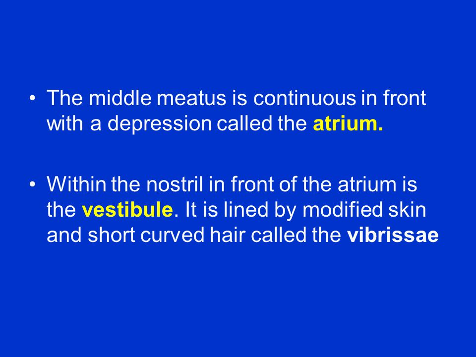 The middle meatus is continuous in front with a depression called the atrium.