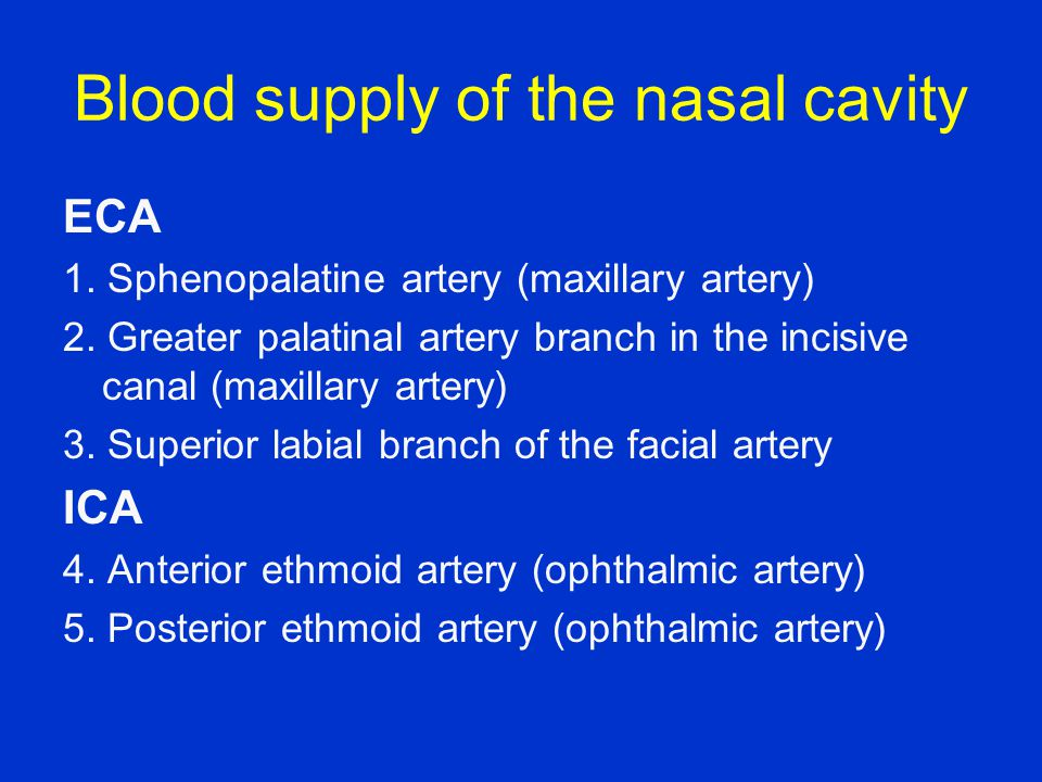 Blood supply of the nasal cavity