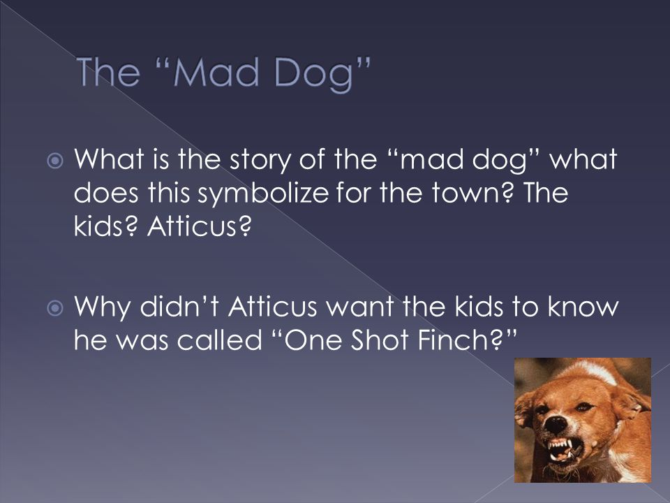 The Mad Dog What is the story of the mad dog what does this symbolize for the town The kids Atticus