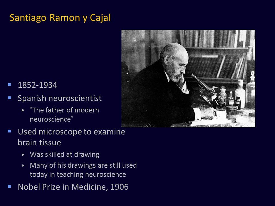 Santiago Ramon y Cajal 1852-1934 Spanish neuroscientist