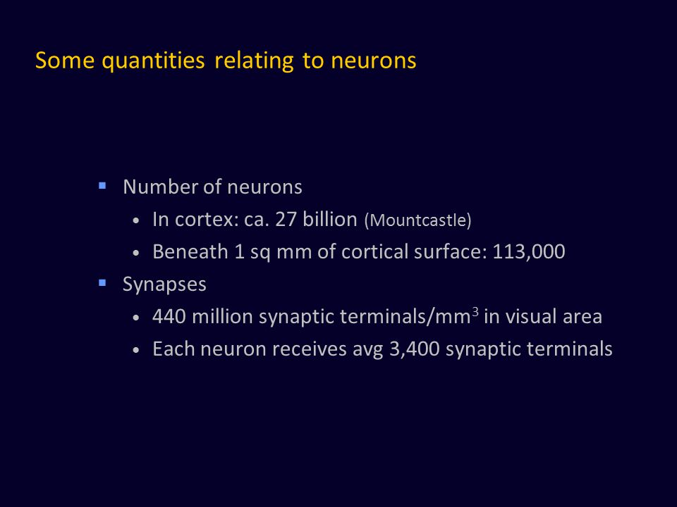 Some quantities relating to neurons