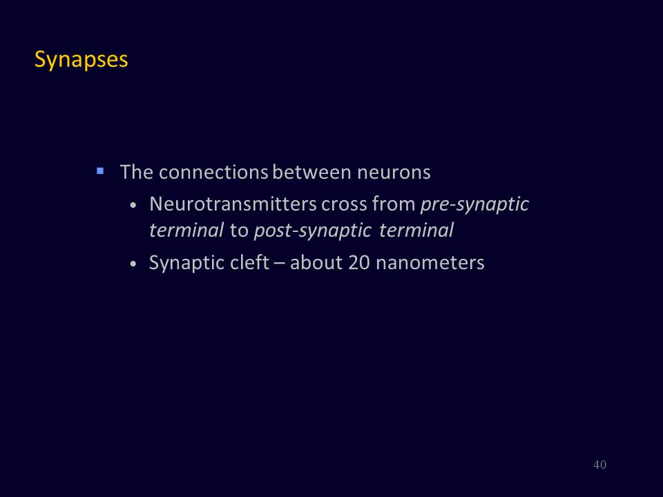 Synapses The connections between neurons