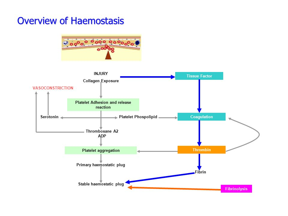 Overview of Haemostasis