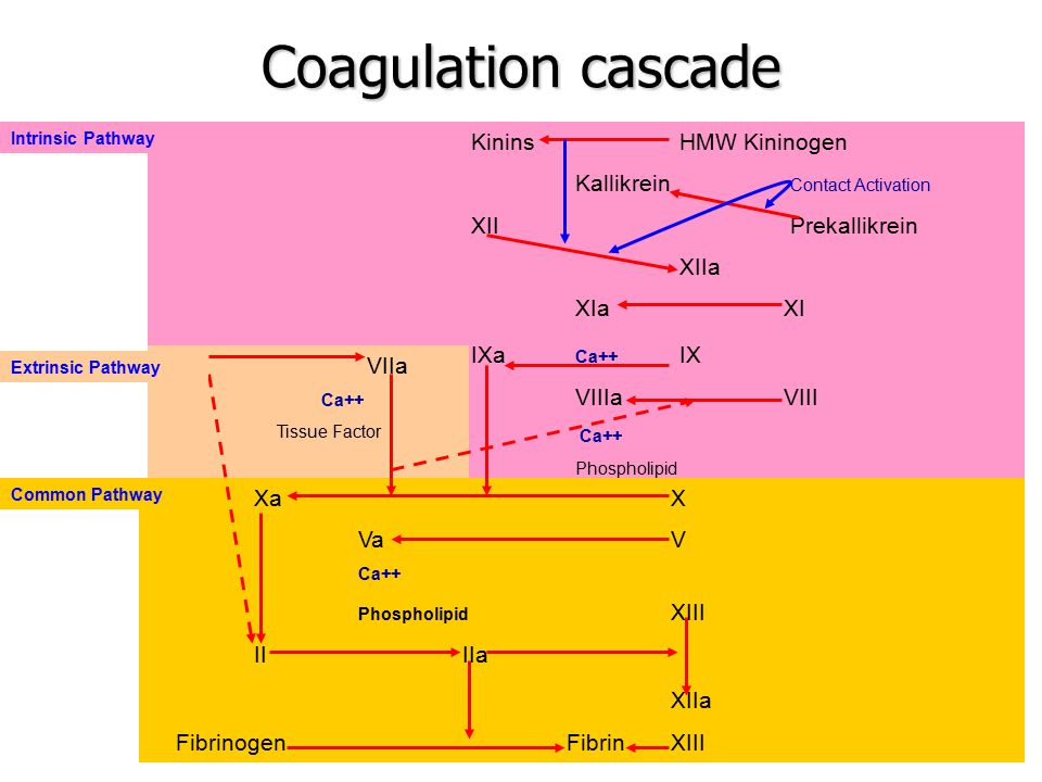 Coagulation cascade XIIa Kinins HMW Kininogen