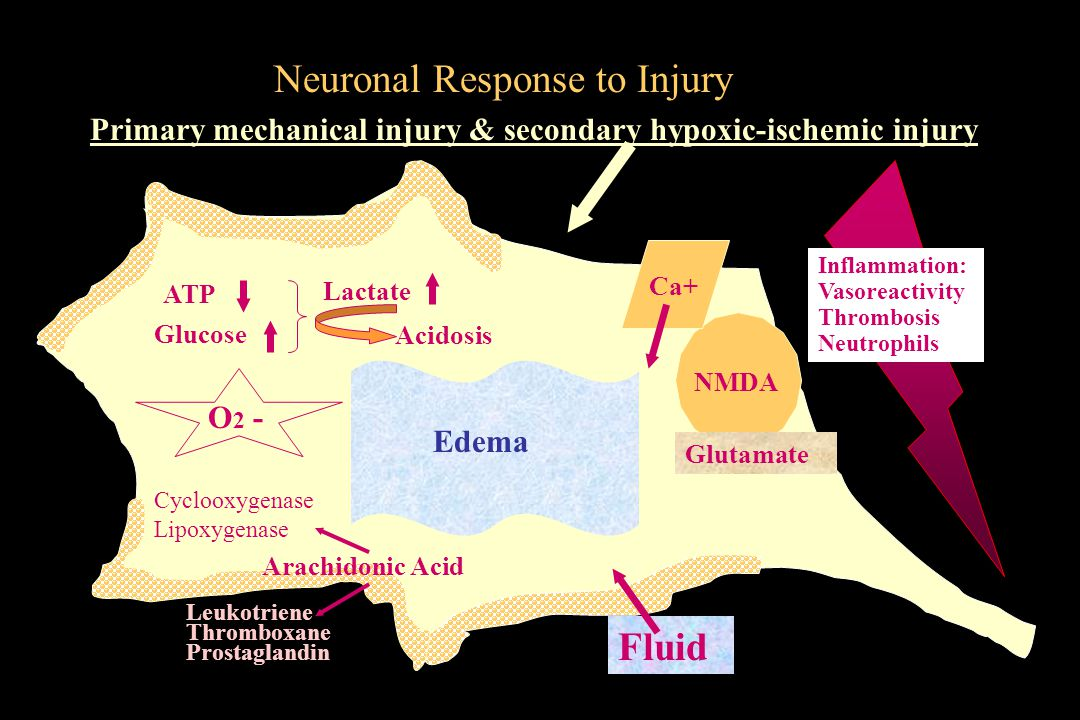 Neuronal Response to Injury
