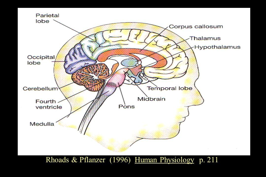 Rhoads & Pflanzer (1996) Human Physiology p. 211
