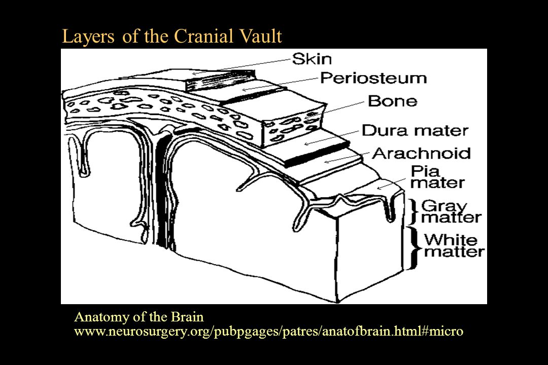 Layers of the Cranial Vault