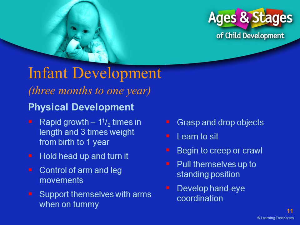 Infant Development (three months to one year)