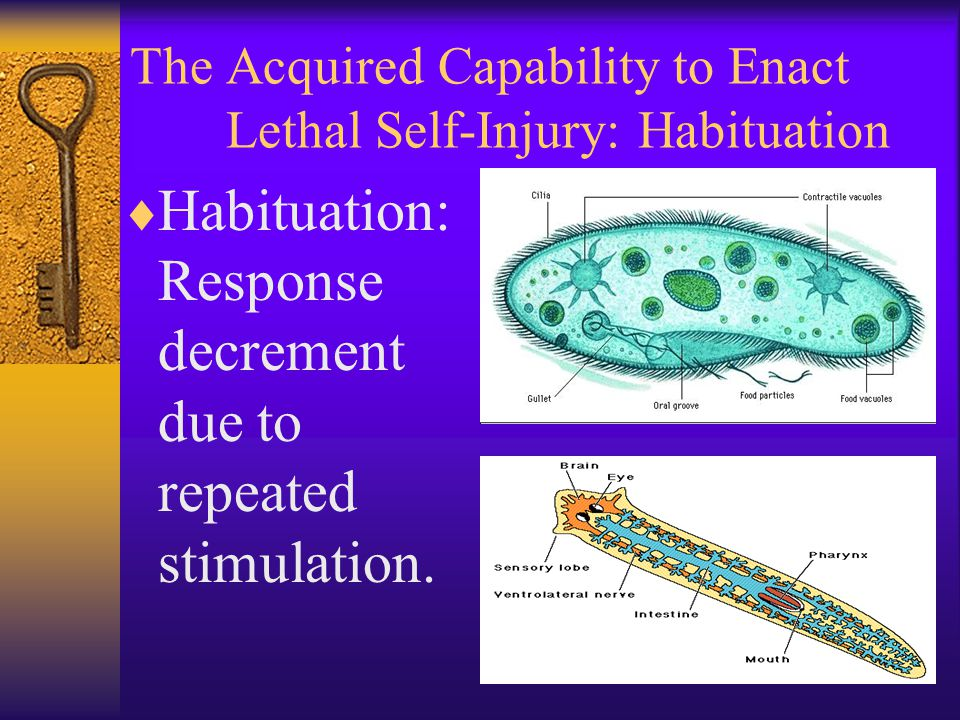 The Acquired Capability to Enact Lethal Self-Injury: Habituation