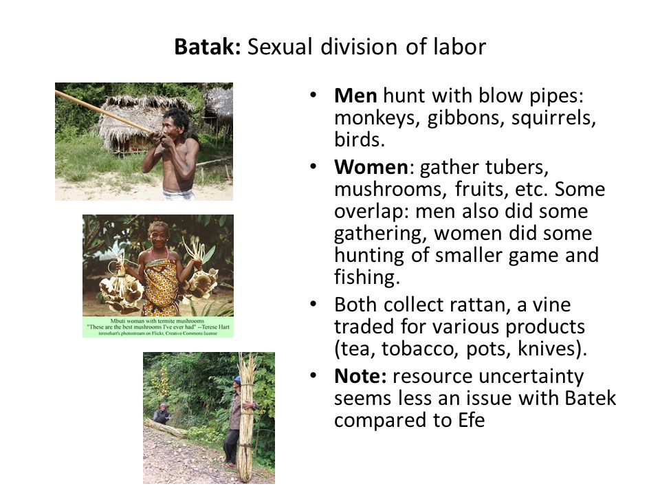 Batak: Sexual division of labor