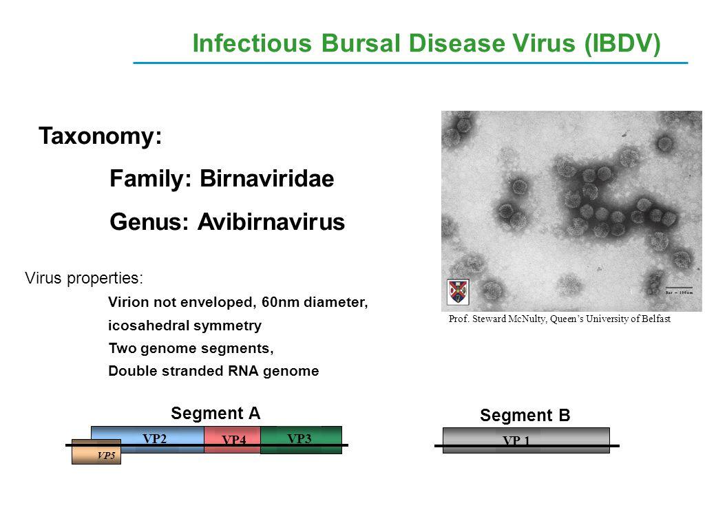 Infectious Bursal Disease Virus (IBDV)