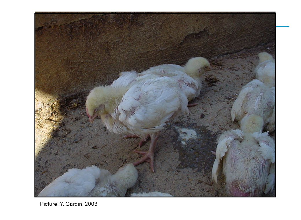 CEVA SANTE ANIMALE Picture: Y. Gardin, 2003