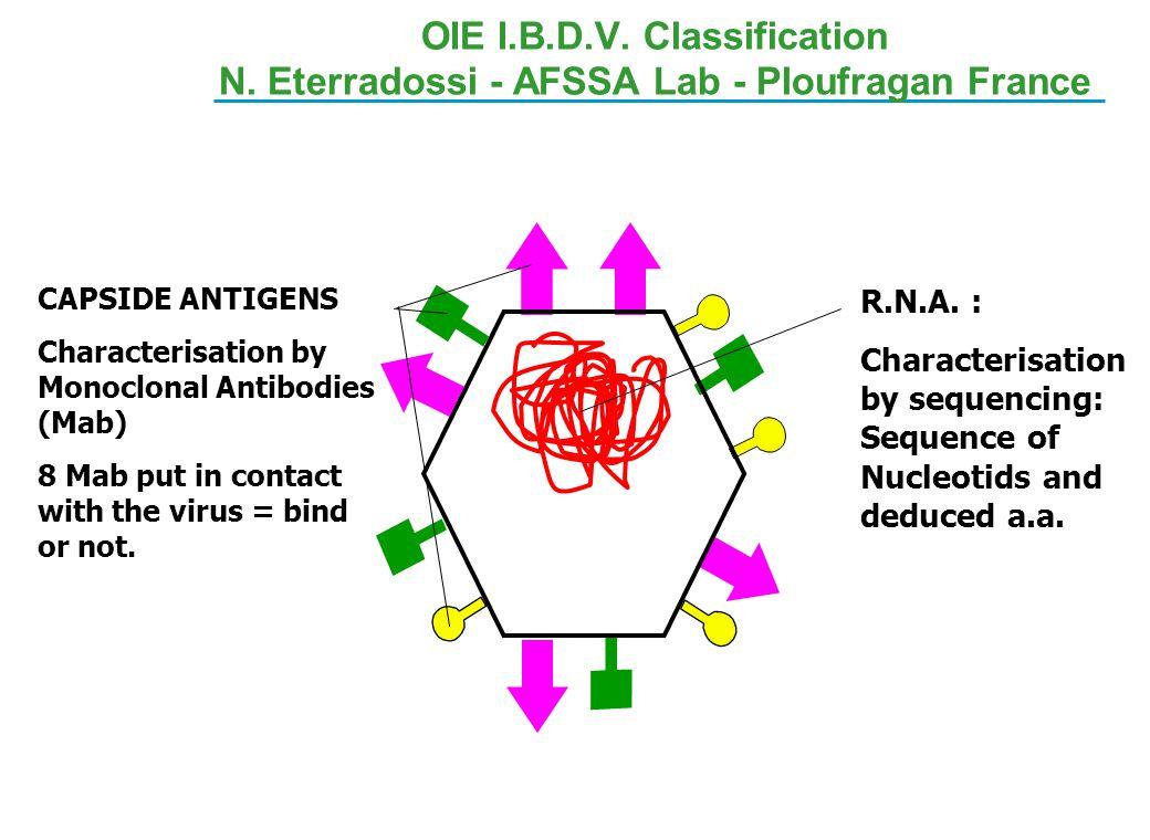 OIE I. B. D. V. Classification N