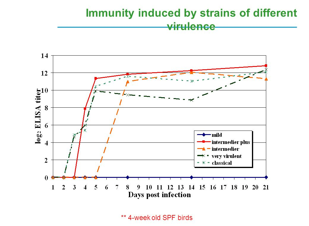 Immunity induced by strains of different virulence