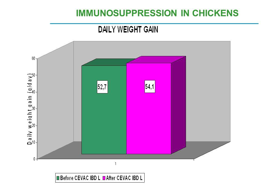 IMMUNOSUPPRESSION IN CHICKENS
