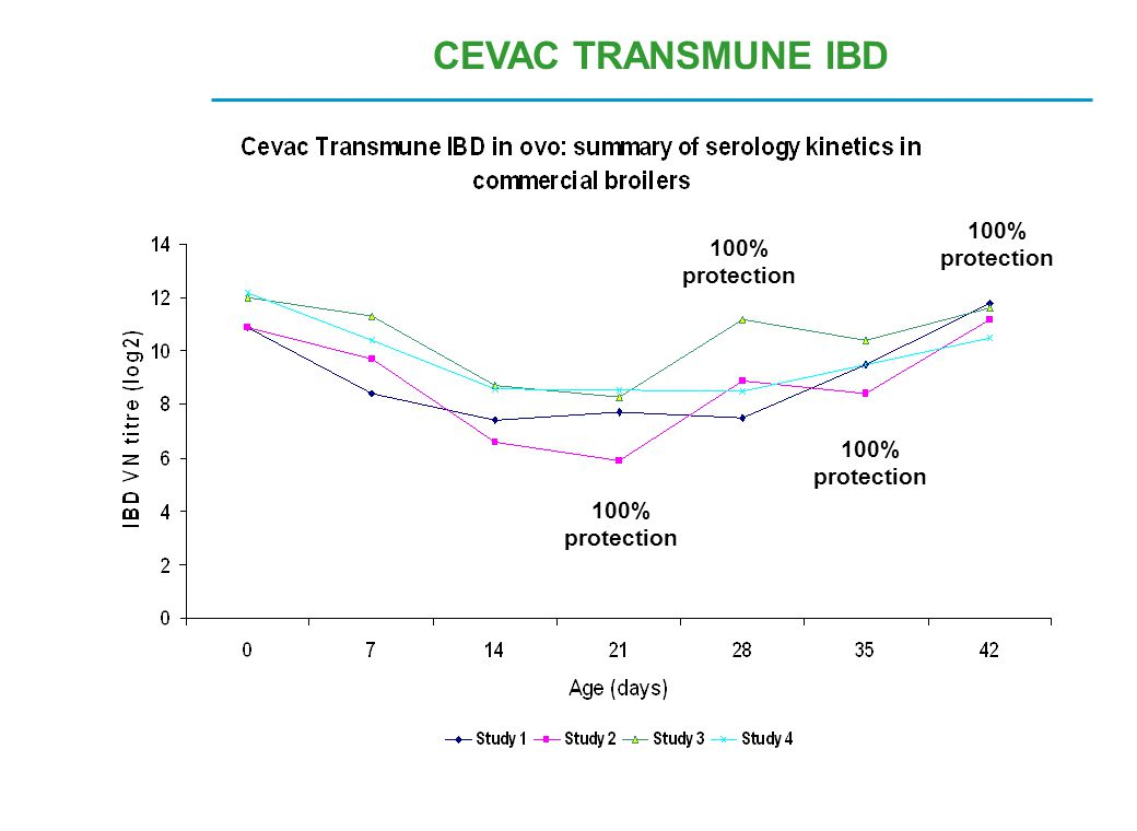 CEVAC TRANSMUNE IBD 100% protection 100% protection 100% protection