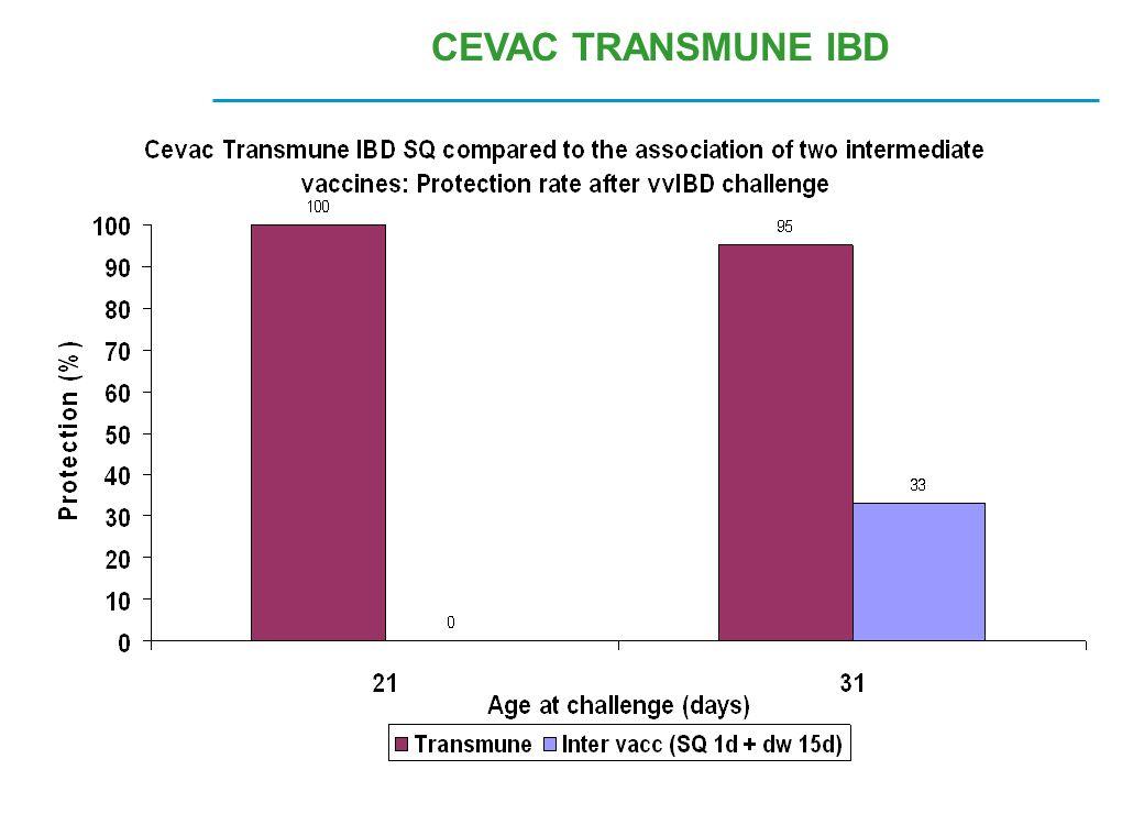CEVAC TRANSMUNE IBD