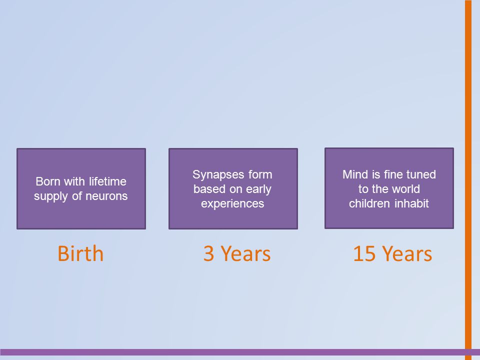 Birth 3 Years 15 Years Synapses form based on early experiences