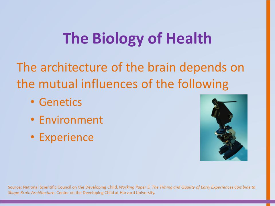 The Biology of Health The architecture of the brain depends on the mutual influences of the following.