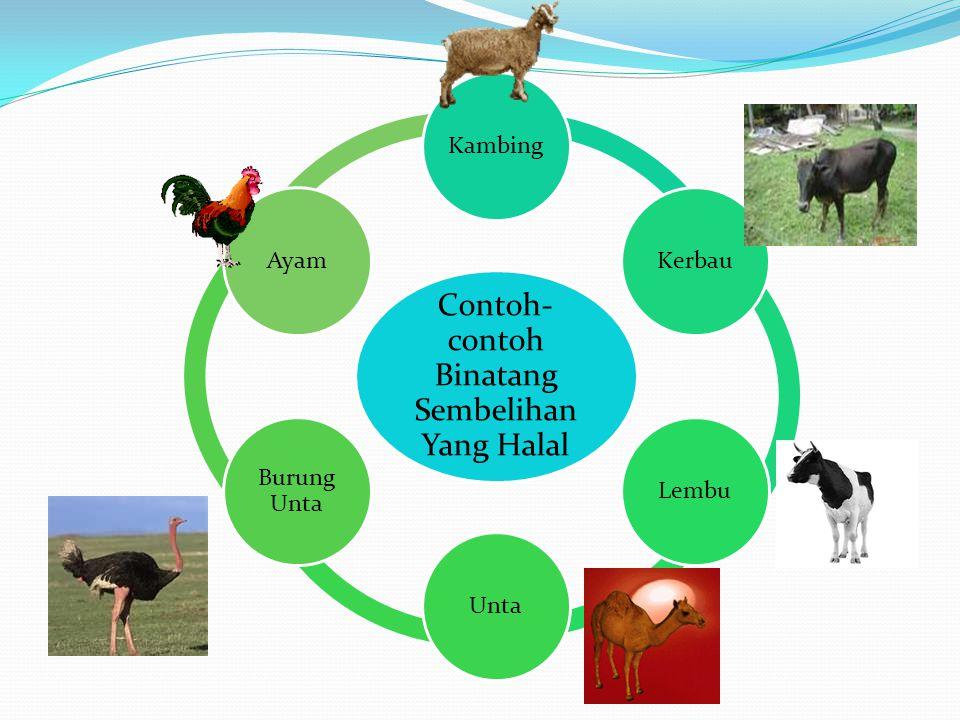 Contoh-contoh Binatang Sembelihan Yang Halal