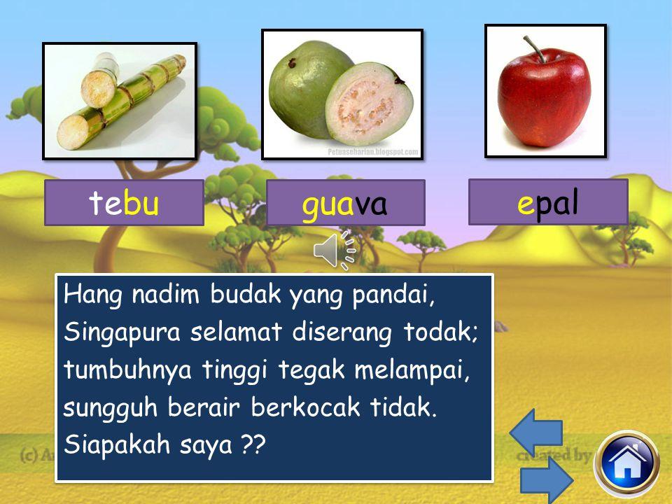 tebu guava. epal.