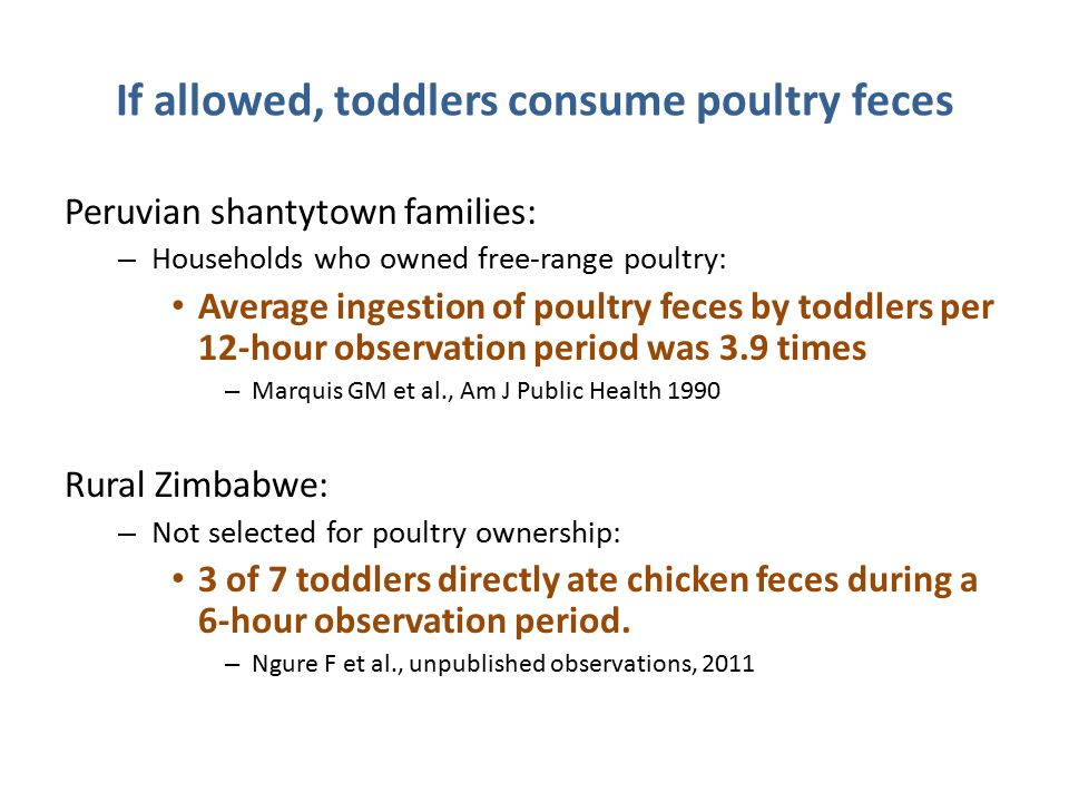 If allowed, toddlers consume poultry feces