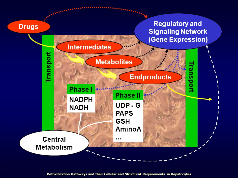 Regulatory and Signaling Network. (Gene Expression) Drugs. Intermediates. Metabolites. Endproducts.