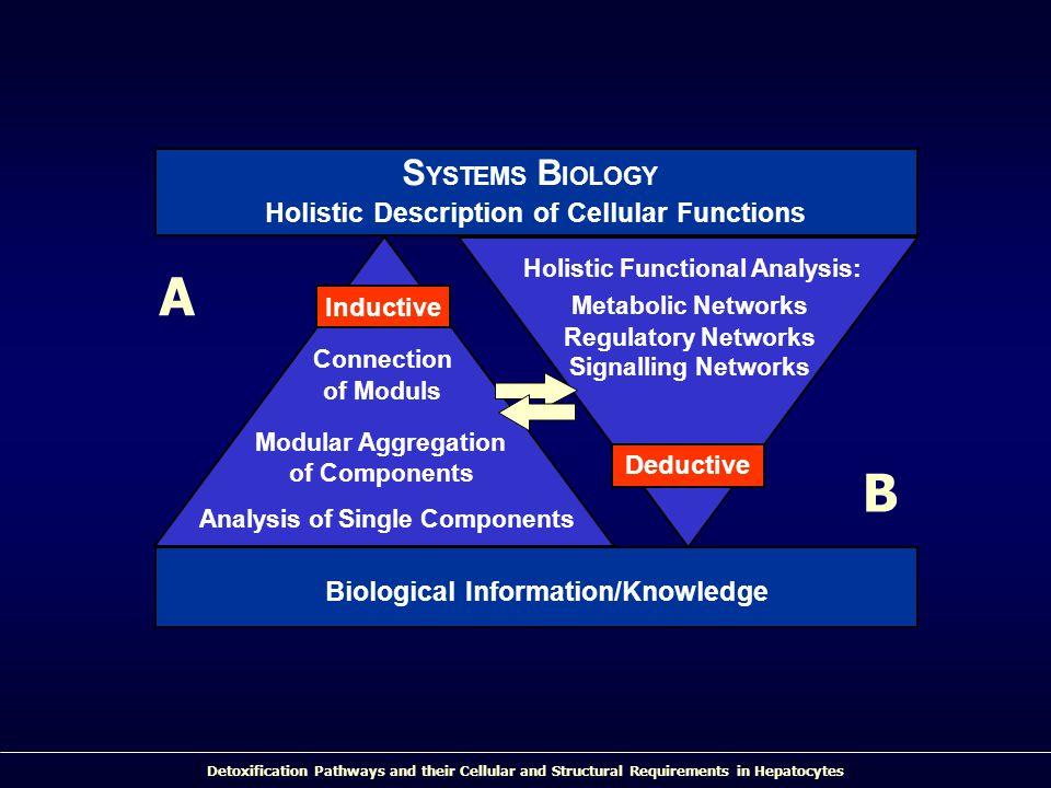 A S B Holistic Description of Cellular Functions