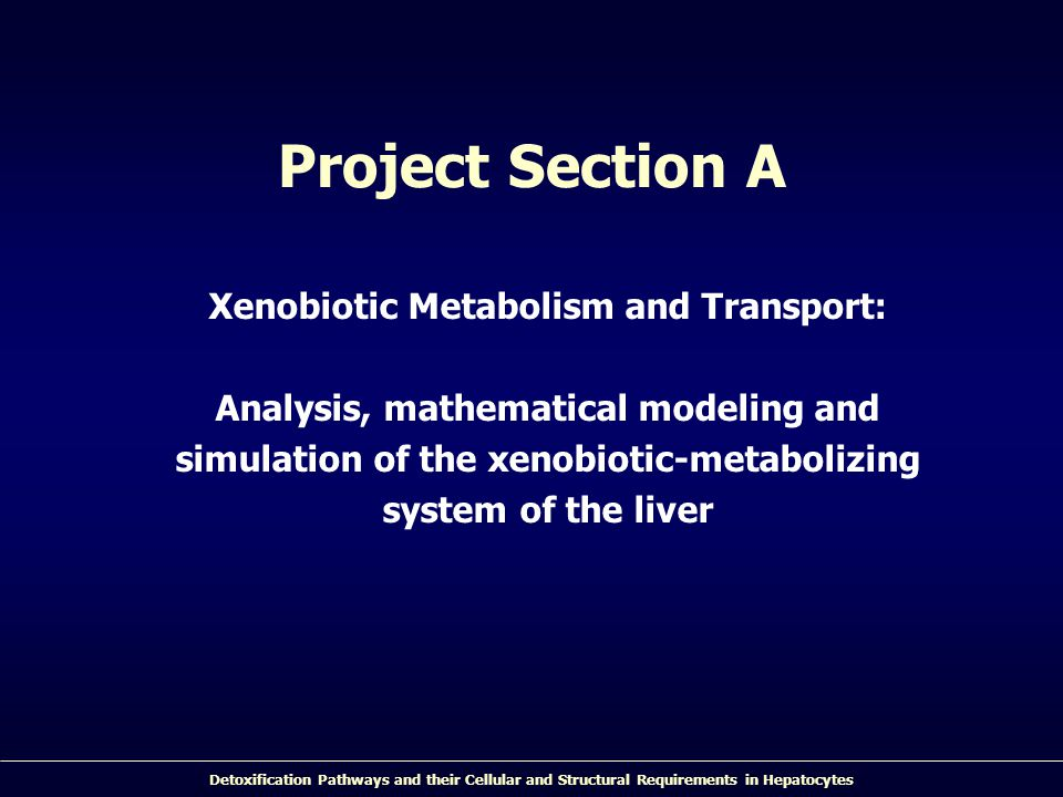 Project Section A Xenobiotic Metabolism and Transport: