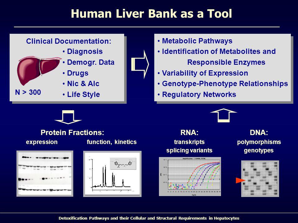 Human Liver Bank as a Tool