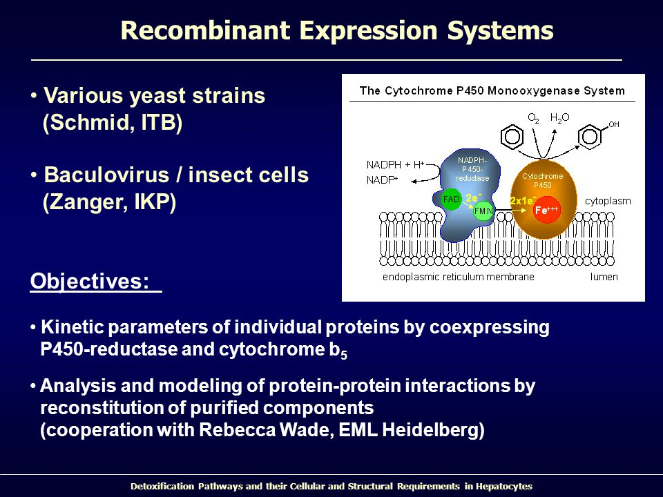 Recombinant Expression Systems