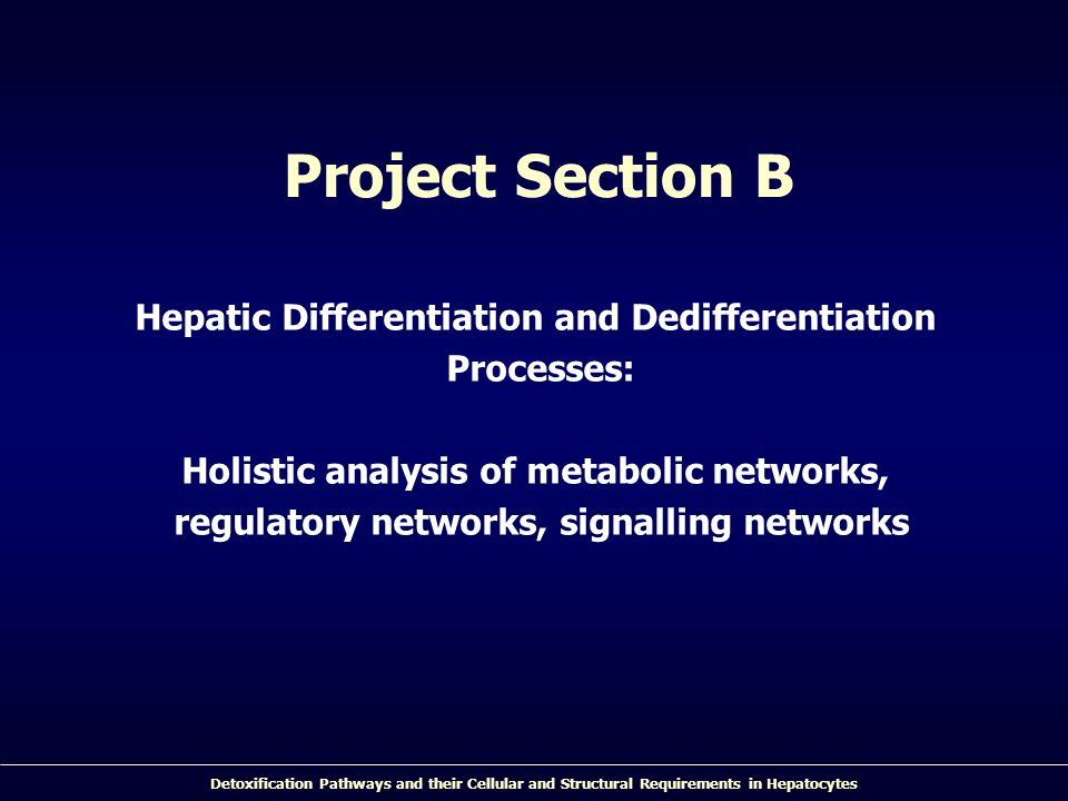 Project Section B Hepatic Differentiation and Dedifferentiation