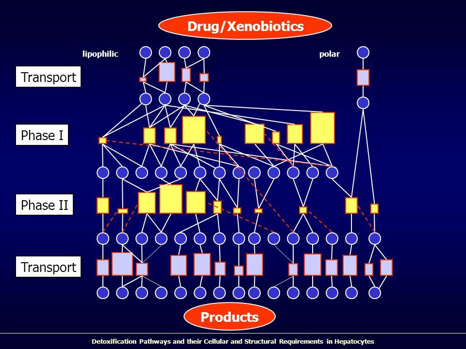 Drug/Xenobiotics Products