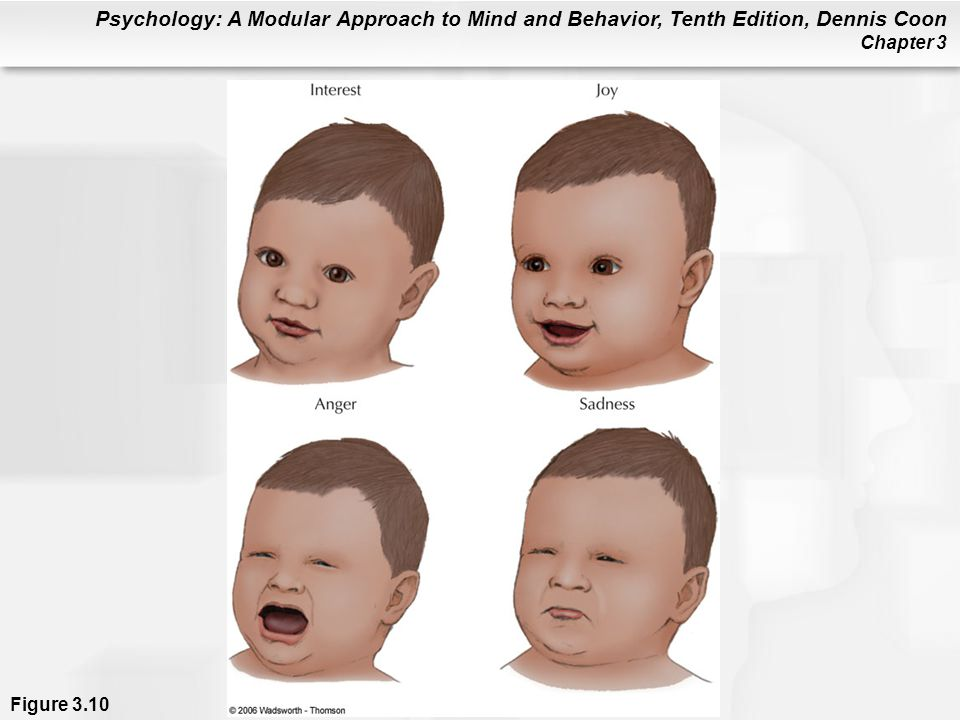 Figure 3.10 Infants display many of the same emotional expressions as adults do. Carroll Izard believes such expressions show that distinct emotions appear within the first months of life. Other theorists argue that specific emotions come into focus more gradually, as an infant's nervous system matures. Either way, parents can expect to see a full range of basic emotions by the end of a baby's first year. By the time babies are 18 months old, they begin to gain control over some of their emotional expressions (Izard & Abe, 2004).