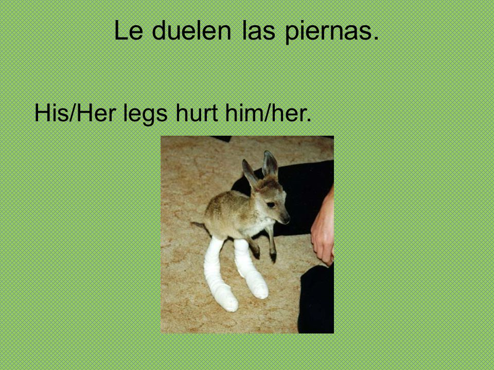 Le duelen las piernas. His/Her legs hurt him/her.