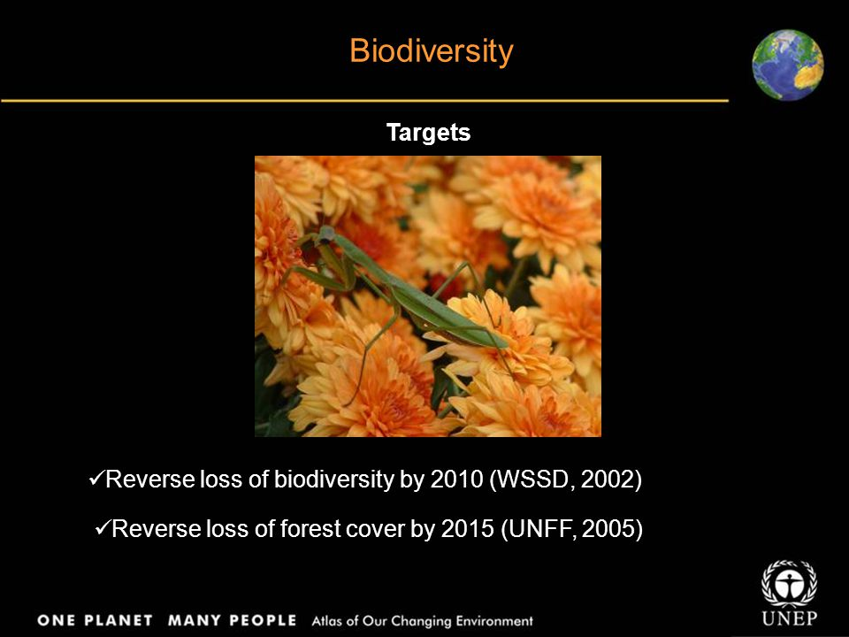 Biodiversity Targets Reverse loss of biodiversity by 2010 (WSSD, 2002)