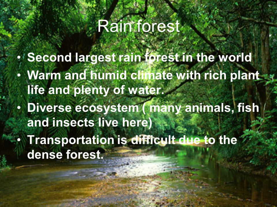 Rain forest Second largest rain forest in the world