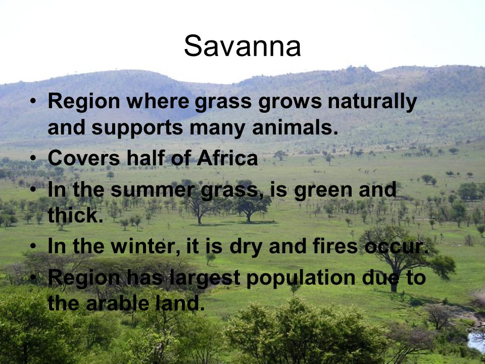 Savanna Region where grass grows naturally and supports many animals.