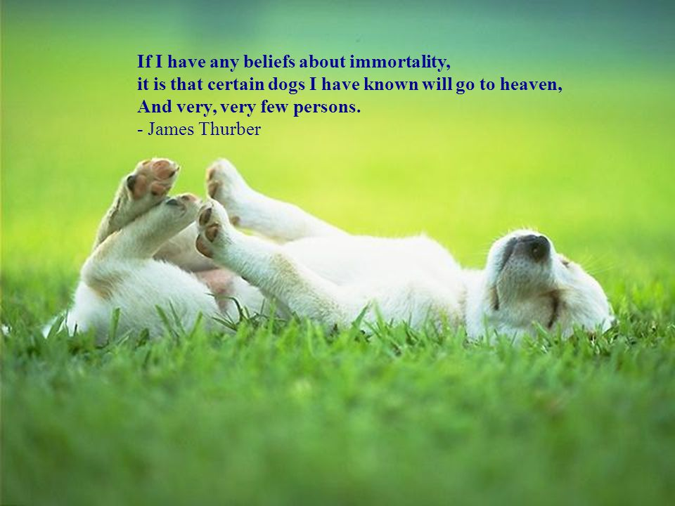 If I have any beliefs about immortality, it is that certain dogs I have known will go to heaven,