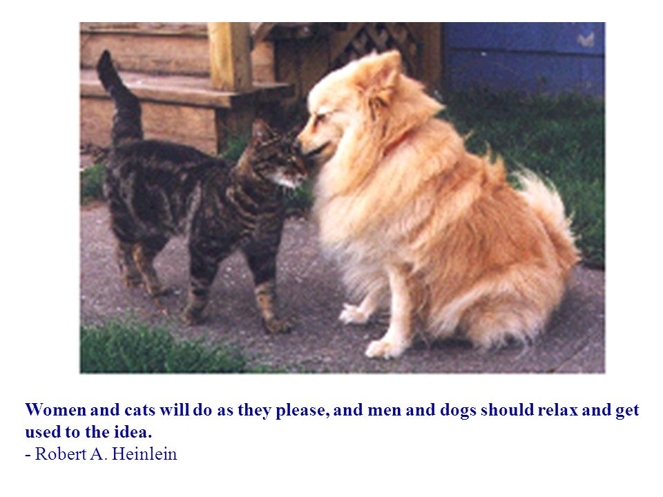 Women and cats will do as they please, and men and dogs should relax and get