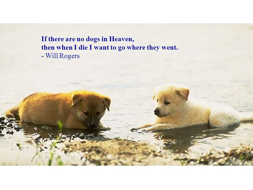 If there are no dogs in Heaven, then when I die I want to go where they went.