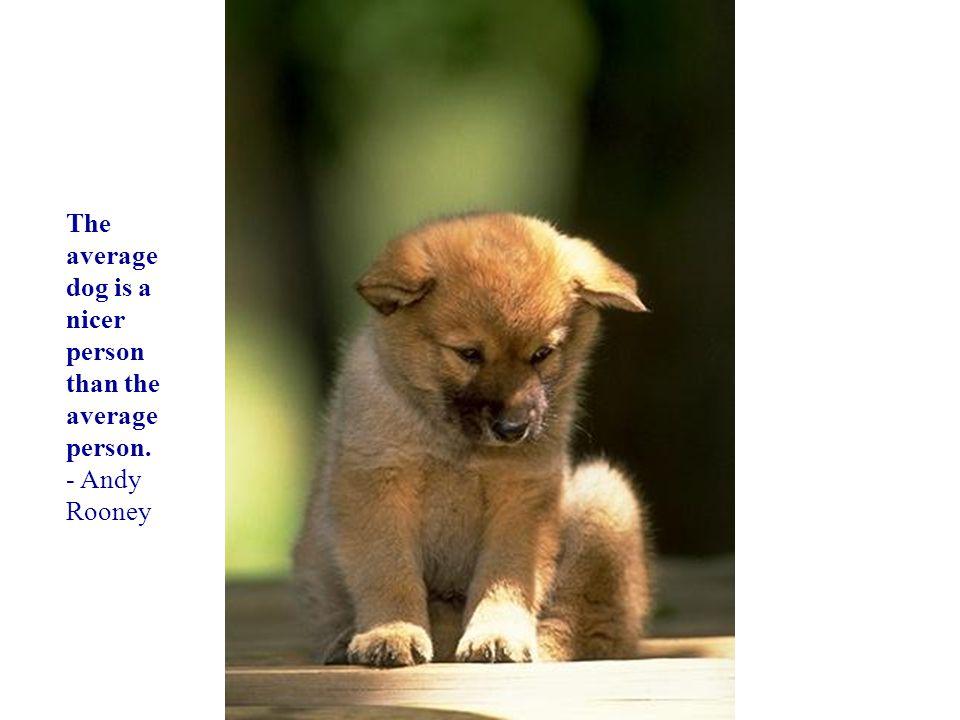你默默的回首 The average dog is a nicer person than the average person.