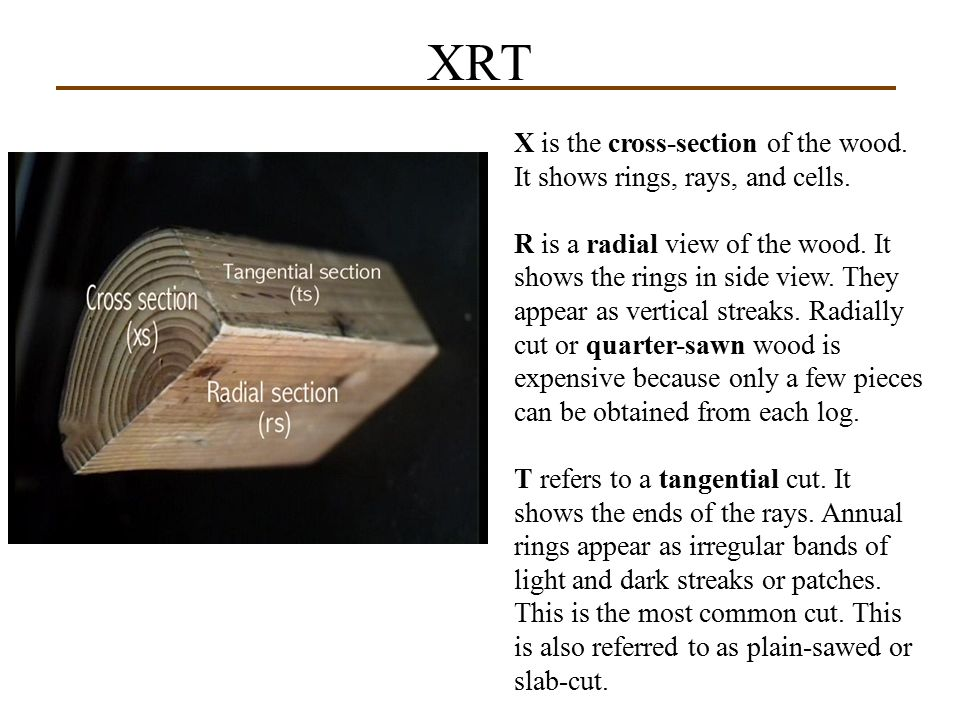 XRT X is the cross-section of the wood. It shows rings, rays, and cells.